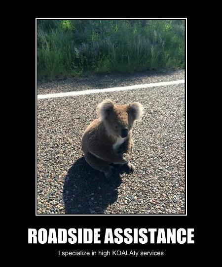 assistance,road side,koala