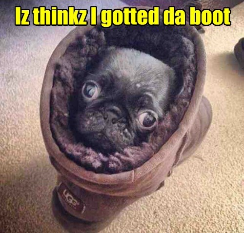 dogs,pug,boot