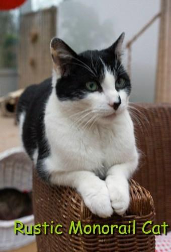 Rustic Monorail Cat