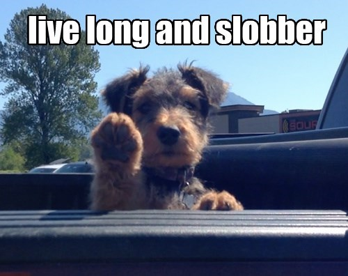 dogs,captions,cute
