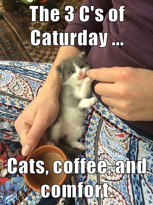 The 3 C's of Caturday ...  Cats, coffee, and comfort.