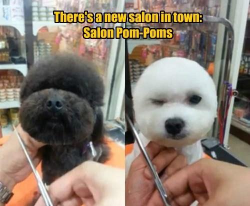 There's a new salon in town:  Salon Pom-Poms