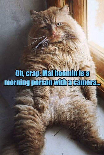 Oh, crap. Mai hoomin is a morning person with a camera...