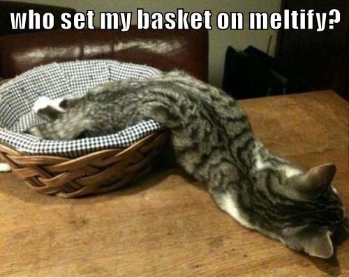 who set my basket on meltify?