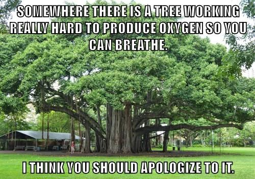 SOMEWHERE THERE IS A TREE WORKING REALLY HARD TO PRODUCE OXYGEN SO YOU CAN BREATHE.  I THINK YOU SHOULD APOLOGIZE TO IT.