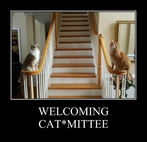 WELCOMING CAT*MITTEE