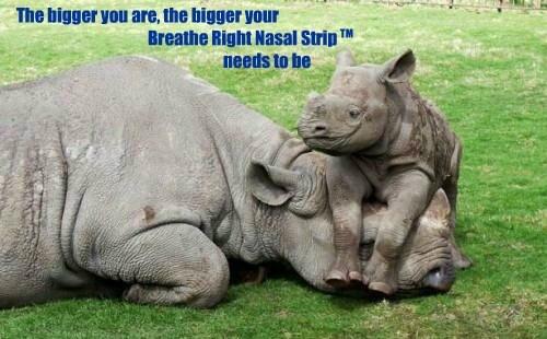 cute,rhinos