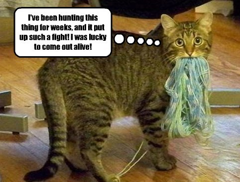 My kitteh is always spinning yarns.