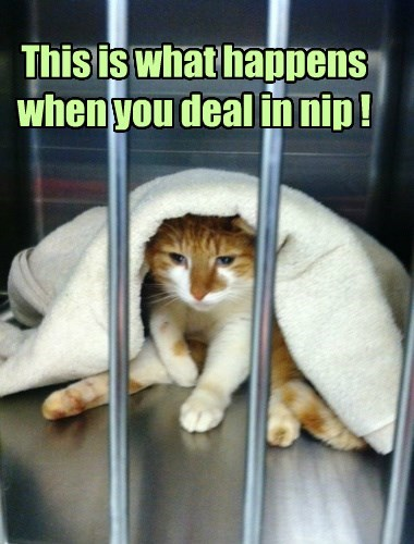Napping Behind Bars Now
