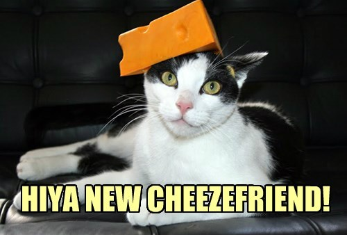 HIYA NEW CHEEZEFRIEND!