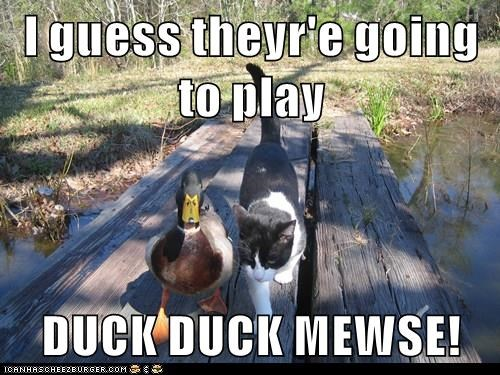 I guess theyr'e going to play  DUCK DUCK MEWSE!