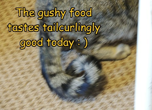 The gushy food tastes tailcurlingly good today : )