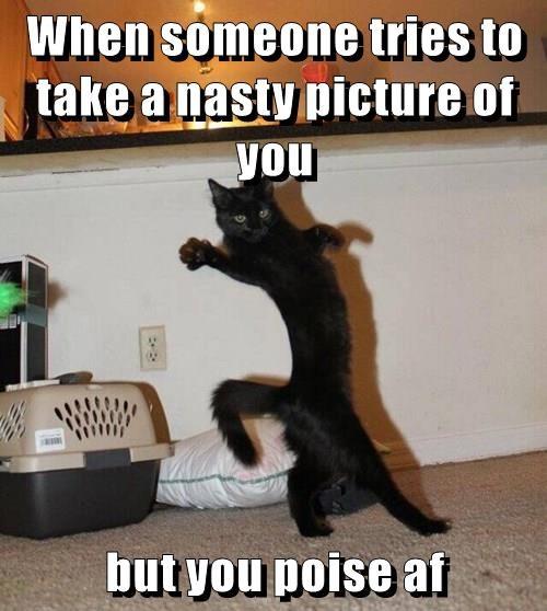 cat,poise,camera