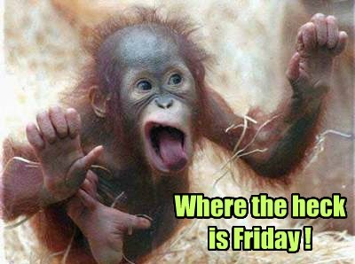 FRIDAY,cute,monkey