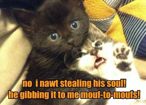 Baby Basement Kittie!