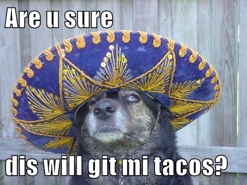 Are u sure   dis will git mi tacos?