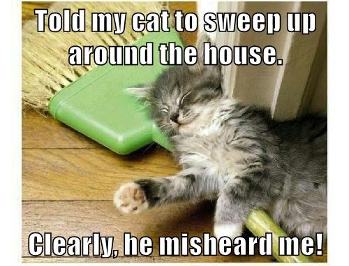 Told my cat to sweep up around the house.  Clearly, he misheard me!