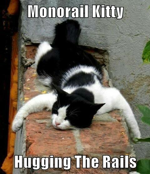 Monorail Kitty  Hugging The Rails