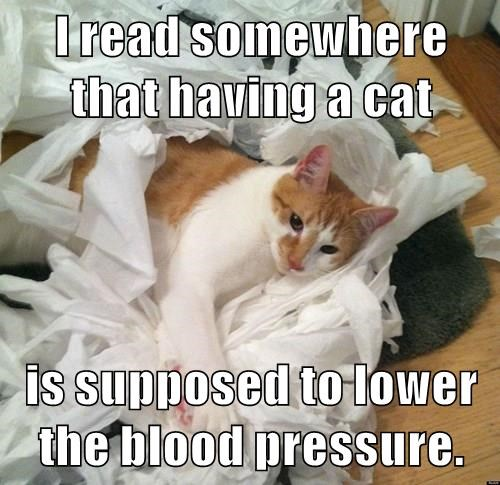I read somewhere that having a cat  is supposed to lower the blood pressure.