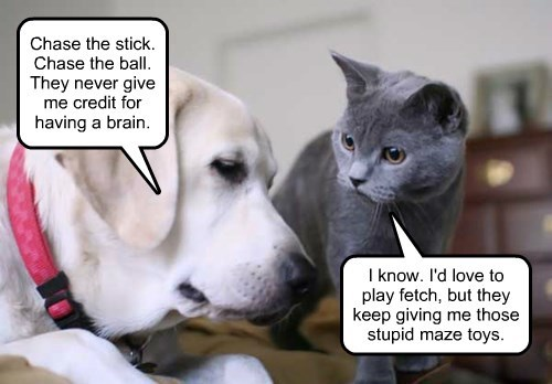 The secret lives of dogs and cats.
