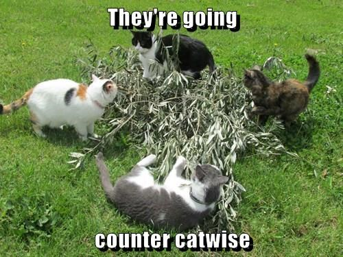 They're going   counter catwise