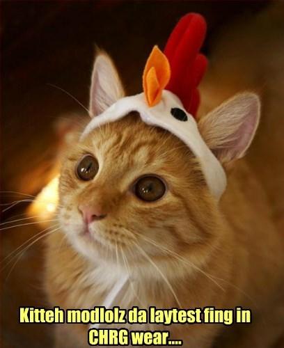 Kitteh modlolz da laytest fing in CHRG wear....