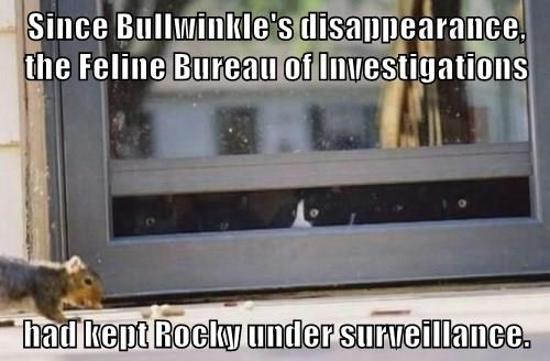 Since Bullwinkle's disappearance, the Feline Bureau of Investigations  had kept Rocky under surveillance.