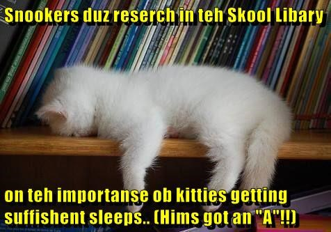 """Snookers duz reserch in teh Skool Libary  on teh importanse ob kitties getting suffishent sleeps.. (Hims got an """"A""""!!)"""