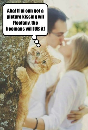 Aha! If ai can get a picture kissing wif Floofany, the hoomans wil LUB it!