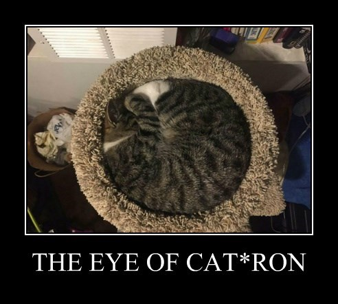 THE EYE OF CAT*RON