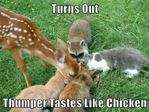 Turns Out  Thumper Tastes Like Chicken
