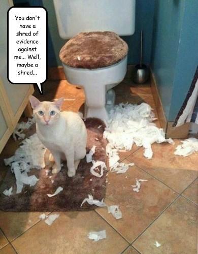 Kitty Forensics
