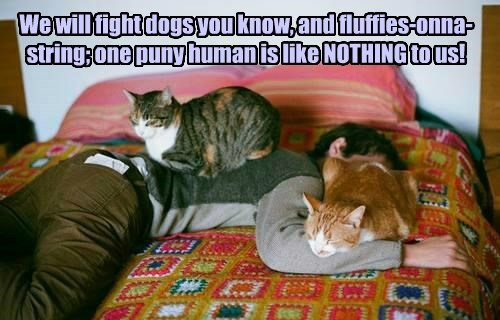 We will fight dogs you know, and fluffies-onna-string; one puny human is like NOTHING to us!