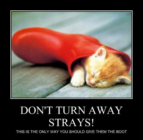 DON'T TURN AWAY STRAYS!