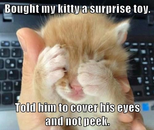 Bought my kitty a surprise toy.  Told him to cover his eyes              and not peek.