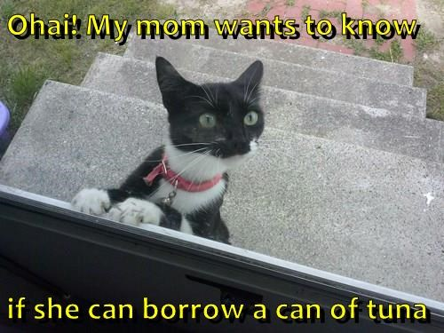 Ohai! My mom wants to know  if she can borrow a can of tuna