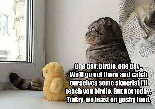 One day, birdie, one day..  We'll go out there and catch ourselves some skwerls! I'll teach you birdie. But not today. Today  we feast on gushy food.