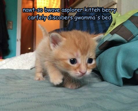 nawt-so bwave asplorer kitteh berry carfely discobers gwamma's bed