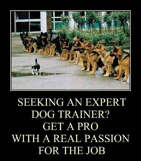 SEEKING AN EXPERT DOG TRAINER? GET A PRO  WITH A REAL PASSION  FOR THE JOB
