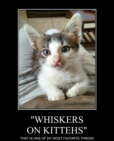 """""""WHISKERS ON KITTEHS"""""""