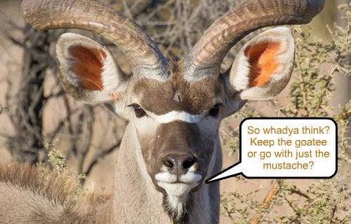 goatee,ear,horns,got