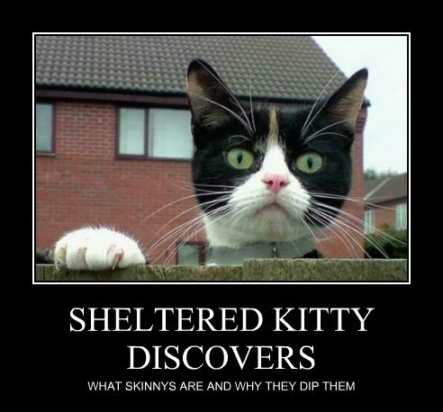 SHELTERED KITTY DISCOVERS