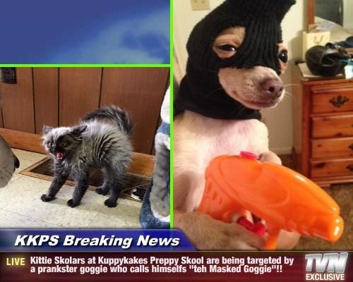 """KKPS Breaking News - Kittie Skolars at Kuppykakes Preppy Skool are being targeted by a prankster goggie who calls himselfs """"teh Masked Goggie""""!!"""
