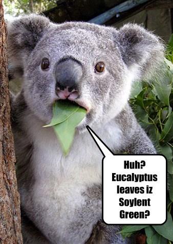 Huh? Eucalyptus leaves iz Soylent Green?
