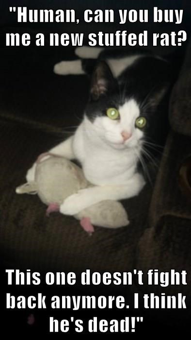 """""""Human, can you buy me a new stuffed rat?  This one doesn't fight back anymore. I think he's dead!"""""""
