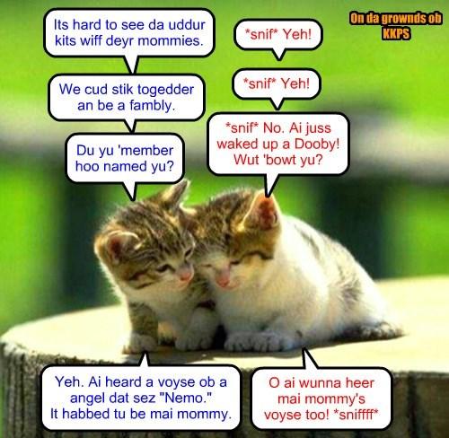 Nemo and Dooby bond ober being motherless.