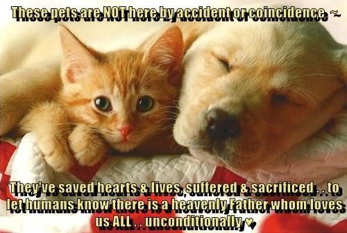 These pets are NOT here by accident or coincidence  ~  They've saved hearts & lives, suffered & sacrificed . . to let humans know there is a heavenly Father whom loves us ALL . . unconditionally ♥