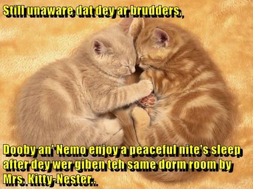 Still unaware dat dey ar brudders,  Dooby an' Nemo enjoy a peaceful nite's sleep after dey wer giben teh same dorm room by Mrs. Kitty-Nester..