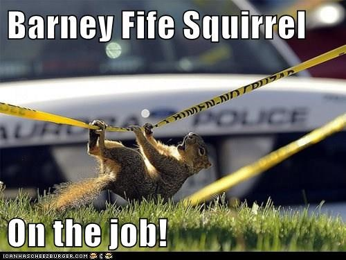 Barney Fife Squirrel  On the job!