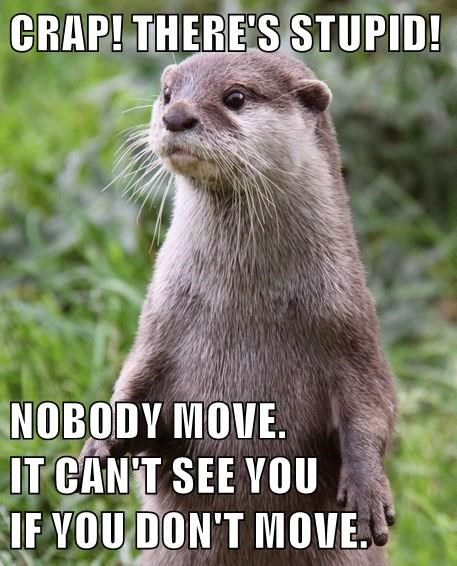cute,stupid,otter